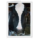 Cow Blank Card