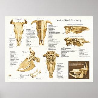 Cow Bovine Skull Anatomy Chart Poster