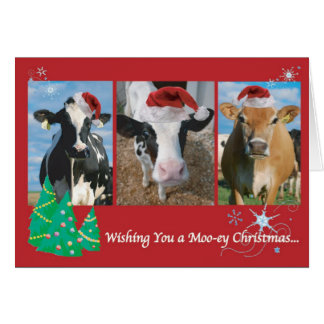Cow Christmas Card