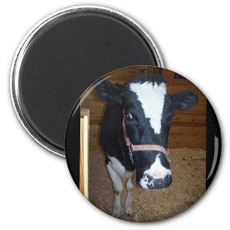 Cow Close Up Portrait Magnets