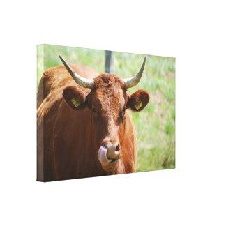 Cow - cow - Photography Jean Louis Glineur Canvas Print