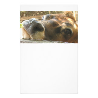 Cow face stationary customised stationery