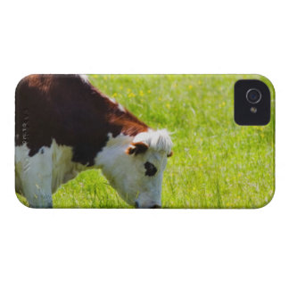 Cow grazing in a field, Loire Valley, France iPhone 4 Covers