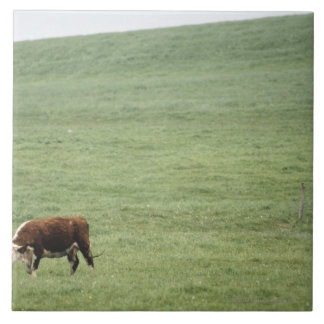 Cow grazing in meadow, Nova Scotia, Canada Tile