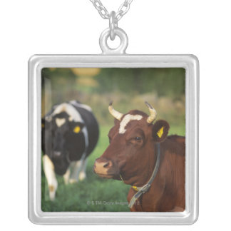 Cow grazing, Sweden. Silver Plated Necklace