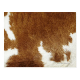 Cow hide postcard