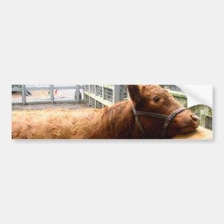 Cow Hug Bumper Sticker