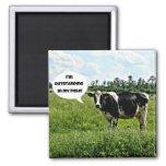 Cow Humour Refrigerator Magnet