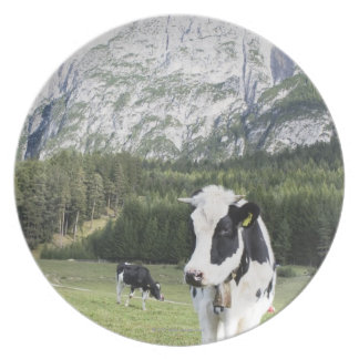 Cow In A Meadow, Fie Allo Sciliar, Alto Adige, Dinner Plates