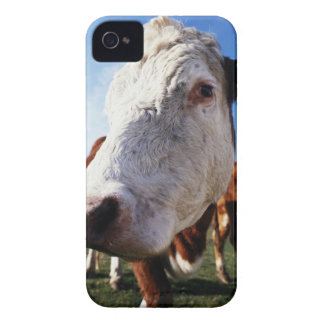 Cow in field, close-up iPhone 4 Case-Mate case