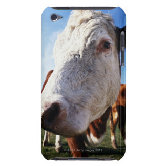 Cow in field, close-up iPod touch cases