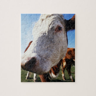 Cow in field, close-up jigsaw puzzle