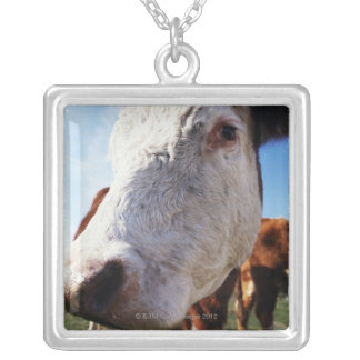 Cow in field, close-up silver plated necklace