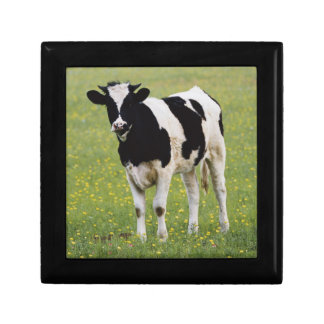 Cow in field of Wildflowers Gift Box