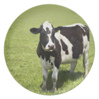 Cow in meadow dinner plate