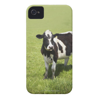 Cow in meadow iPhone 4 Case-Mate cases