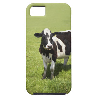 Cow in meadow iPhone 5 covers