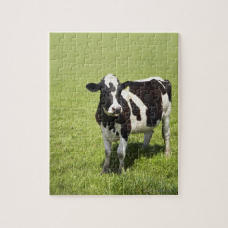 Cow in meadow jigsaw puzzle