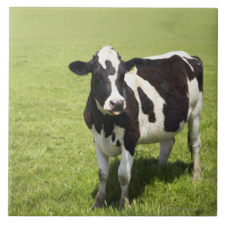 Cow in meadow tile