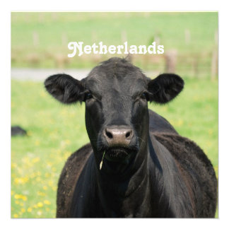 Cow in Netherlands Personalized Announcements