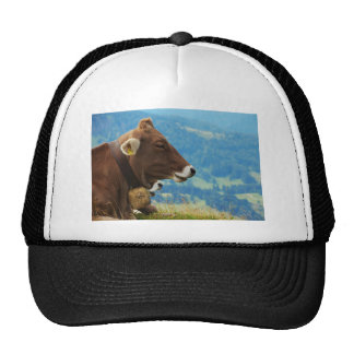 Cow in the mountains cap