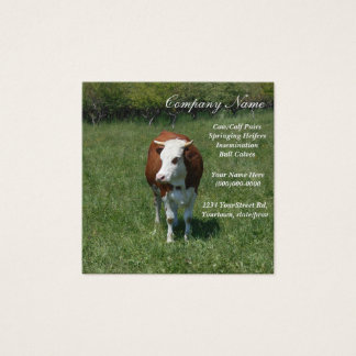 Cow In The Pasture Square Business Card