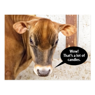 Cow Is Mad Birthday Postcard