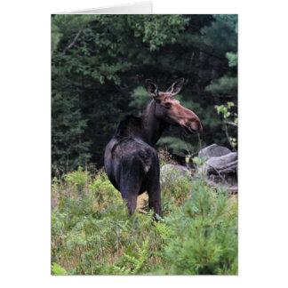 Cow Moose Card