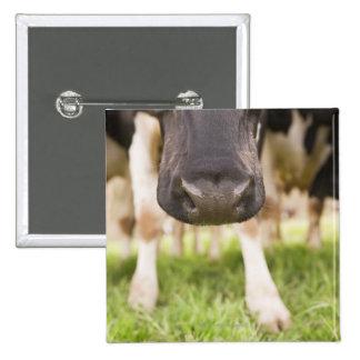 Cow nose 15 cm square badge