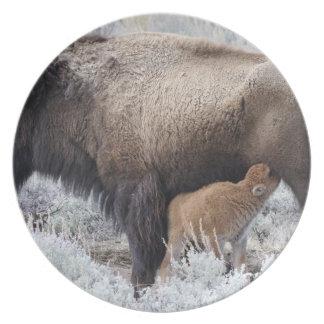 Cow Nursing Bison Calf, Yellowstone 2 Dinner Plate