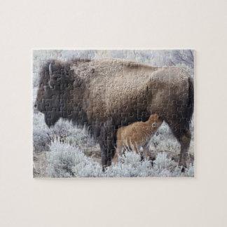 Cow Nursing Bison Calf, Yellowstone 2 Jigsaw Puzzle