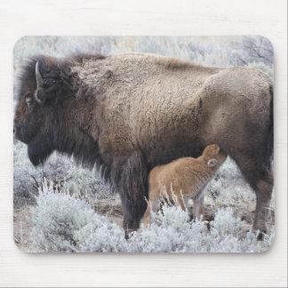 Cow Nursing Bison Calf, Yellowstone 2 Mouse Mat