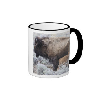 Cow Nursing Bison Calf Yellowstone 2 Mug