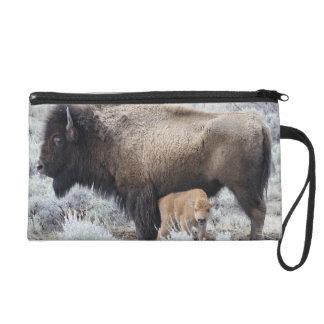 Cow Nursing Bison Calf, Yellowstone 3 Wristlets