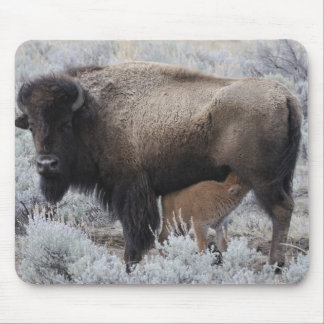 Cow Nursing Bison Calf, Yellowstone Mouse Mat
