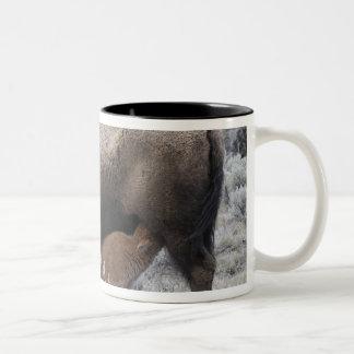 Cow Nursing Bison Calf, Yellowstone Coffee Mugs