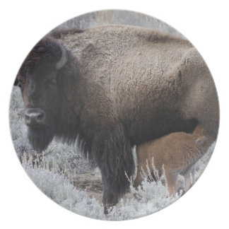 Cow Nursing Bison Calf, Yellowstone Plate