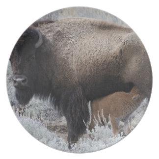 Cow Nursing Bison Calf, Yellowstone Plate