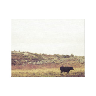 Cow old canvas print