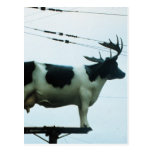 Cow on a Telephone Pole Post Cards