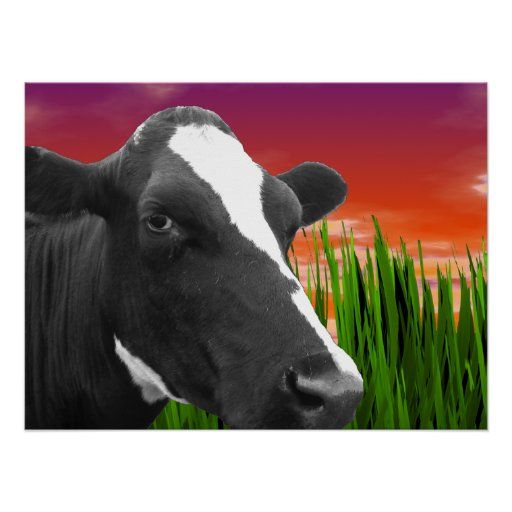 Cow On Grass & Vivid Sunset Sky Poster