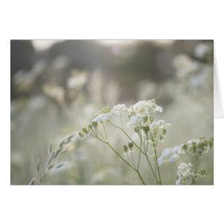 Cow parsley in Spring meadow. Card