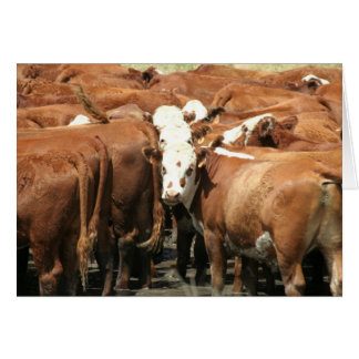 Cow Photography Greeting Card