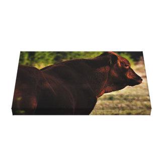 Cow Portrait 1 Canvas Print