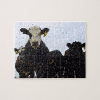 Cow Posse Puzzle