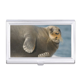 Cow rests on sea ice floating along the coast business card holder