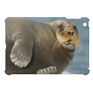 Cow rests on sea ice floating along the coast iPad mini cases