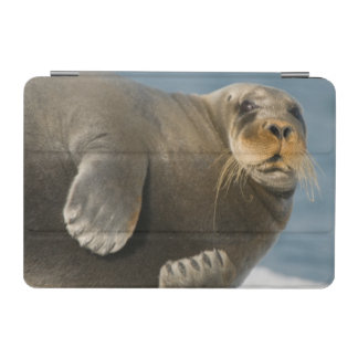 Cow rests on sea ice floating along the coast iPad mini cover
