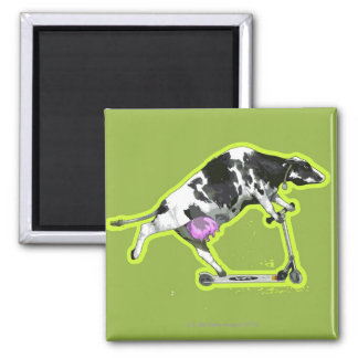Cow Riding a Scooter Square Magnet