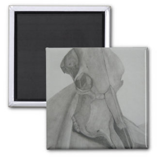 Cow skull pencil drawing magnet